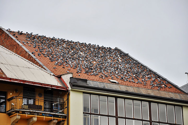 A2B Pest Control are able to install spikes to deter birds from roofs in Bowes Park.