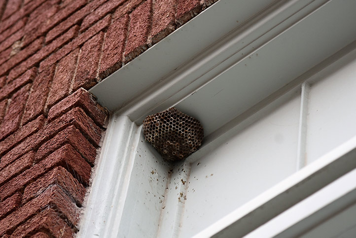 We provide a wasp nest removal service for domestic and commercial properties in Bowes Park.